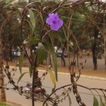 Last Day in Kampala