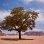 Petra and Wadi Rum